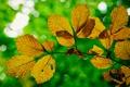 Картинка осень, листья, макро, свет, ветка, блик