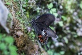 Картинка макро, чёрный, бабочка, крылышки
