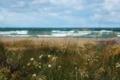 Картинка море, трава, природа