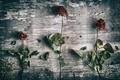 Картинка текстура, фон, цветы
