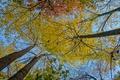 Картинка осень, небо, листья, деревья, ствол