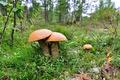 Картинка трава, грибы, трио