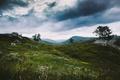 Картинка grass, trees, flowers, clouds, hills