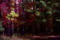 Картинка осень, лес, листья, цвета, деревья