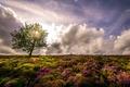 Картинка лето, поле, дерево