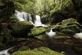 Картинка лес, деревья, ручей, камни, водопад, мох
