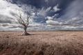 Картинка дерево, небо, поле
