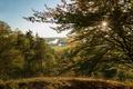 Картинка трава, деревья, ветки, река, поля, Германия, Бавария