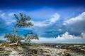Картинка отлив, берег, дерево, облака, небо, море