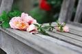 Картинка flowers roses, розы, лавочка, цветы, shop