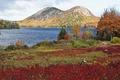 Картинка США, осень, трава, озеро, деревья, кусты, Acadia National Park