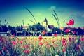 Картинка поле, небо, цветы, стебель, церковь