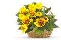 Картинка листья, тюльпаны, жёлтые, корзина