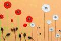 Картинка фон, цветы, цвет
