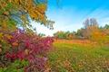 Картинка парк, деревья, трава, осень, листья, багрянец