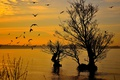 Картинка небо, птицы, озеро, дерево