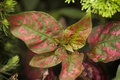 Картинка листья, природа, растение, цвет