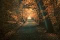 Картинка дорога, осень, лес