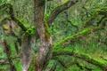 Картинка дерево, ветки, hdr, ствол, мох