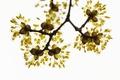Картинка цветы, природа, ветка, весна