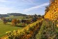 Картинка деревья, дома, Швейцария, долина, склон, виноградник