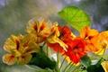 Картинка листья, макро, лепестки, сад
