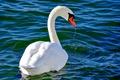 Картинка шея, лебедь, вода, клюв, птица