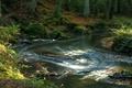 Картинка лес, листья, деревья, ручей, камни, течение, мох