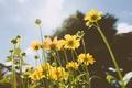Картинка желтые, лепестки, цветы