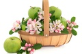 Картинка цветы, корзина, яблоки