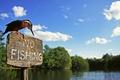 Картинка река, птица, табличка, вывеска, зимородок, kingfisher