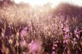 Картинка поле, свет, цветы