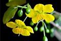 Картинка растение, фон, стебель, цветы