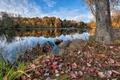 Картинка осень, небо, трава, листья, река, дерево