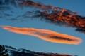 Картинка зарево, силуэт, дерево, облака, небо